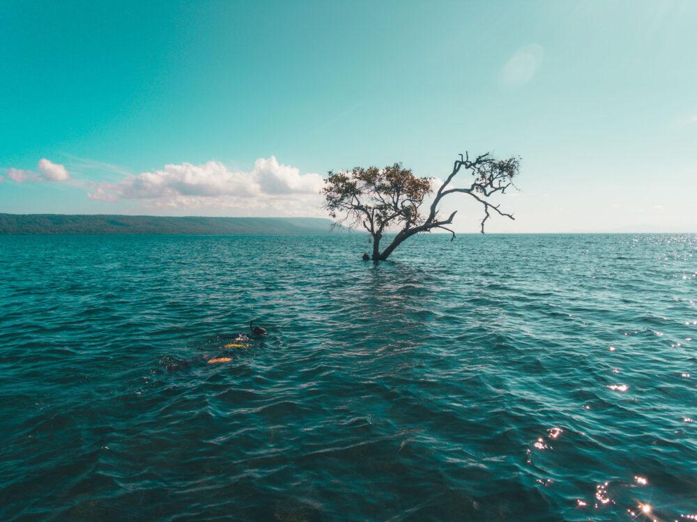 Können Bäume ertrinken