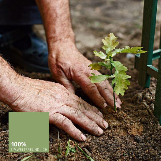 100% umweltfreundlich, Eiche pflanzen_Pfenning_Massivholzmoebel